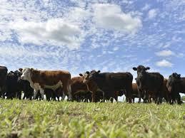 default y ganadería
